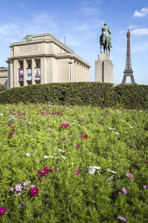 photo-SG-2017-BROSSY-chaillot-SITE-B-02